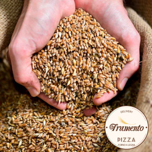 grano-timilia copia
